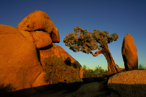 national parks essays